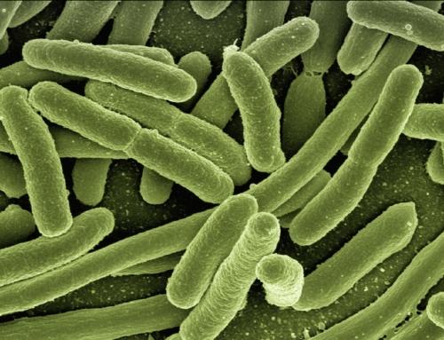 Sistema di monitoraggio infezioni ed uso ragionato degli antibiotici – 31 Maggio, Genova.